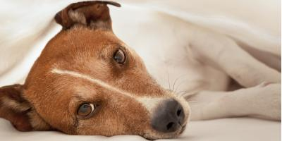 Pet Clinic Shares 5 Signs Your Dog May Have Arthritis, Mount Washington, Kentucky