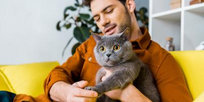 4 Pet Care Items First-Time Cat Owners Need, Mount Washington, Kentucky