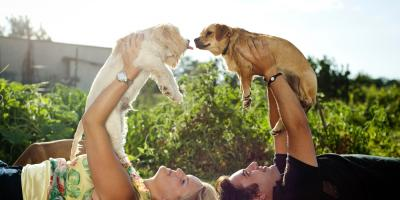 A Pet Care Expert's Guide to Introducing a New Animal to the Others , Mount Washington, Kentucky
