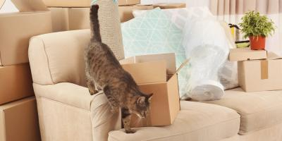 3 Moving Tips Pet Owners Should Follow, Honolulu, Hawaii