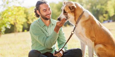 4 Tips for Making Your Move With a Senior Dog Comfortable, Ewa, Hawaii