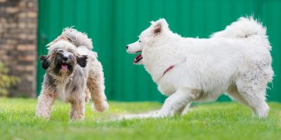 3 Reasons Dogs Love Doggie Daycare, Conway East, South Carolina