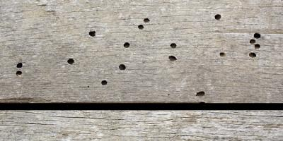 3 Signs of Wood Borer Insects Living in Your Home, North River, Virginia