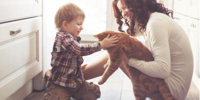 3 Reasons Why Tile Is Perfect for Pet Owners, Odessa, Texas