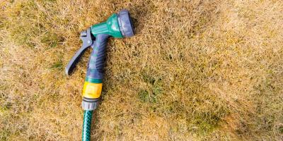 Sod Webworms: What They Are & How They Hurt Your Lawn, Cincinnati, Ohio