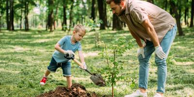 A Guide to Planting Trees in Summer, High Point, North Carolina