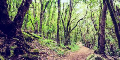 Tree Services Experts Share 3 Common Tree Diseases in North Carolina, Saluda, North Carolina