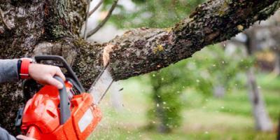 3 Reasons to Hire Tree Trimming Professionals , Lincoln, Nebraska