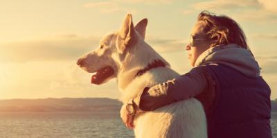3 Qualities to Look For in a Veterinarian, Lincoln, Nebraska