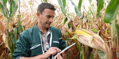 Top 3 Ways Farmers Benefit From Crop Insurance , Beatrice, Nebraska