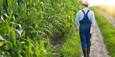 3 Reasons Farmers Need Crop Insurance, Beatrice, Nebraska