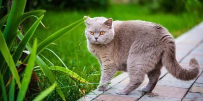 3 Benefits of Flea & Tick Treatments, Jefferson, Ohio