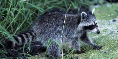 3 Benefits of Hiring Animal Control Services, New Braunfels, Texas