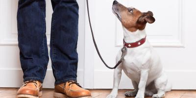 3 of the Best Flooring Materials for Pet Owners, Wawayanda, New York