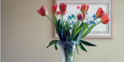 4 Health Benefits That Increase the Value of Giving Flowers, Branford Center, Connecticut