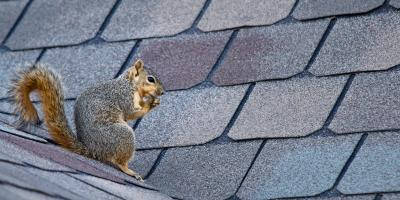 3 Ways Squirrels Can Damage Homes, New Milford, Connecticut