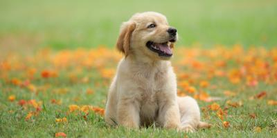 A Basic Guide to Dog Grooming for Your Puppy, Manhattan, New York