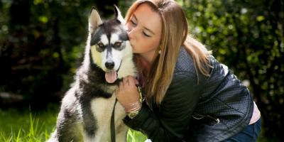What to Know Before Taking Home a Husky, Manhattan, New York