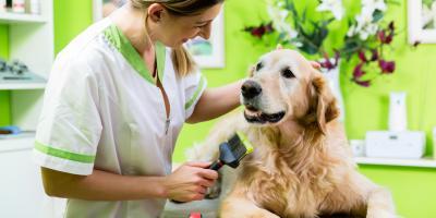 3 Reasons to Invest in Regular Pet Grooming, Buckeye Lake, Ohio