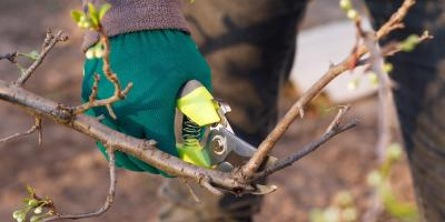 5 Essential Tree Care Tasks, Newport-Fort Thomas, Kentucky