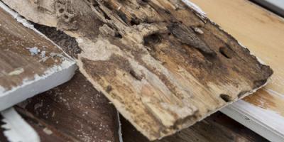How Quickly Do Termites Eat Wood?, Newport, Ohio