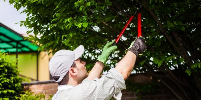 5 Tips for Healthy Trees, Nicholasville, Kentucky