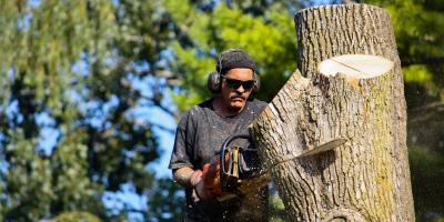 3 Reasons to Hire a Professional for Tree Removal, Nicholasville, Kentucky