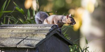 How to Keep Vermin out of Your Home This Winter, China Grove, North Carolina