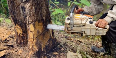 5 Signs You Need Emergency Tree Removal, North Royalton, Ohio