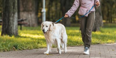 3 Ways to Protect Your Pets From Wild Animals, New Milford, Connecticut