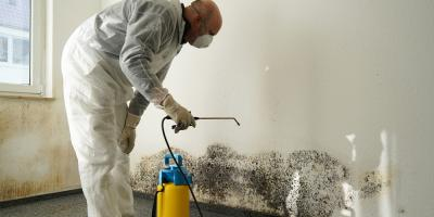Why You Need Mold Remediation, New York, New York