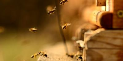 3 Steps to Follow After an Insect Sting, Rochester, New York