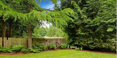 The Do's & Don'ts of Landscaping Around Trees, Honolulu, Hawaii