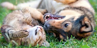 3 Reasons Pet Owners Should Have Artificial Turf, Wahiawa, Hawaii