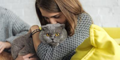 How You Can Help Prevent Kidney Failure in Your Cat, Green, Ohio