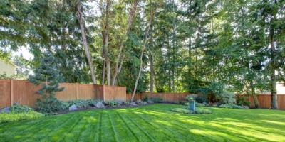 3 Tips to Prevent Tree Roots From Damaging Your Septic System, Brady, Michigan