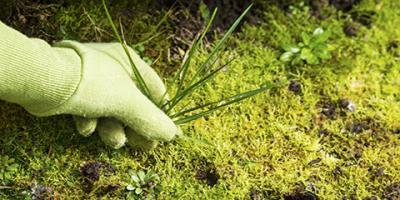 Brief Guide to Lawn Weed Control, North Ridgeville, Ohio