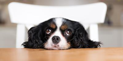 Veterinarians List 3 Foods You Shouldn't Feed Your Dog, Honolulu, Hawaii