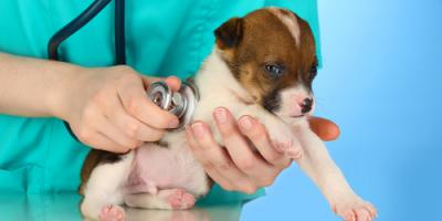 3 Tips for Working With Your Veterinarian to Set Up a Vaccination Schedule, Honolulu, Hawaii