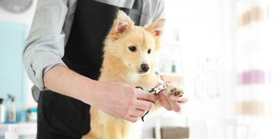 A Dog Owner's Guide to Nail Grooming, Miami, Ohio