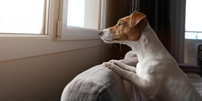 How to Handle Separation Anxiety in Dogs , Beavercreek, Ohio