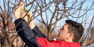 A Brief Guide to Wintertime Pruning, Fairfield, Ohio