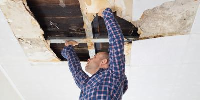 Frequently Asked Questions About Black Mold, Omaha, Nebraska