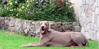 3 Landscape Design Ideas for Dog Owners, Orange Beach, Alabama