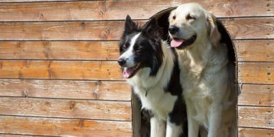 5 Questions to Ask Before Choosing a Boarding Kennel for Your Dog, Walworth, New York