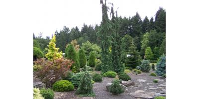 Fairfield Garden Store Explores the Ideal Time to Plant Trees, Fairfield, Ohio