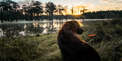 3 Useful Dog Accessories for Winter Walks, Jacksonville East, Florida