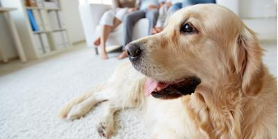 3 HVAC Maintenance Tips for Pet Owners, West Buffalo, Pennsylvania