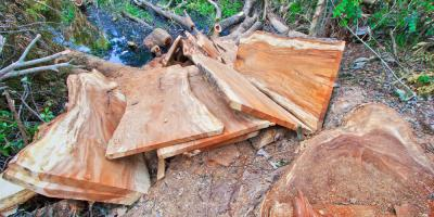 Top 3 Stump Removal FAQs Answered , Marinette, Wisconsin