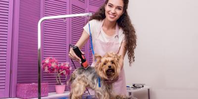5 Tips for Choosing the Right Dog Groomer, St. Paul, Minnesota
